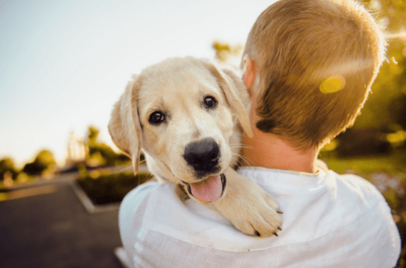5 Signs Your Dog is Truly Happy